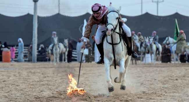 فرسان سعوديون يستعرضون مهاراتهم في سفاري بقيق - صحيفة البلاد