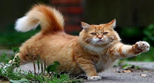 قطط جائعة تلتهم جثة مربيها بمصر