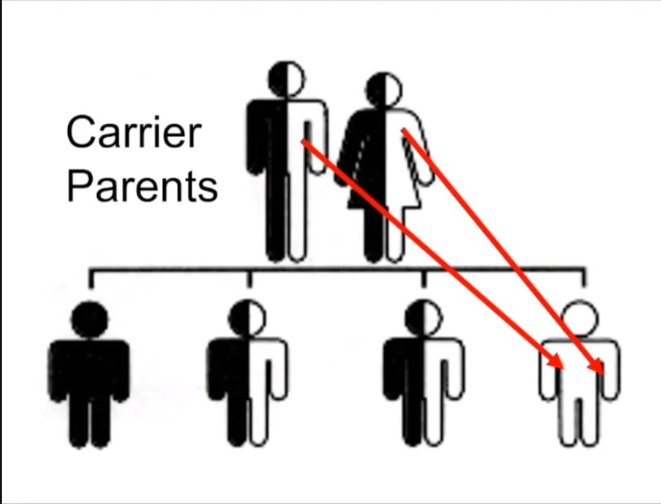 A genetic chart showing two carrier parents and their offspring