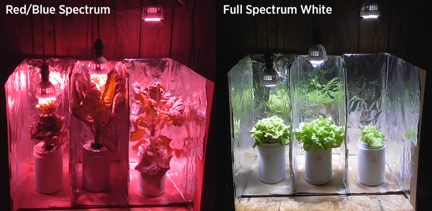Red And Blue Spectrum Led Lights