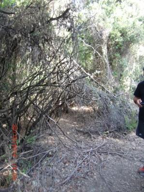 piste découvrant l'accés à un chemin communal jusque là inacessible