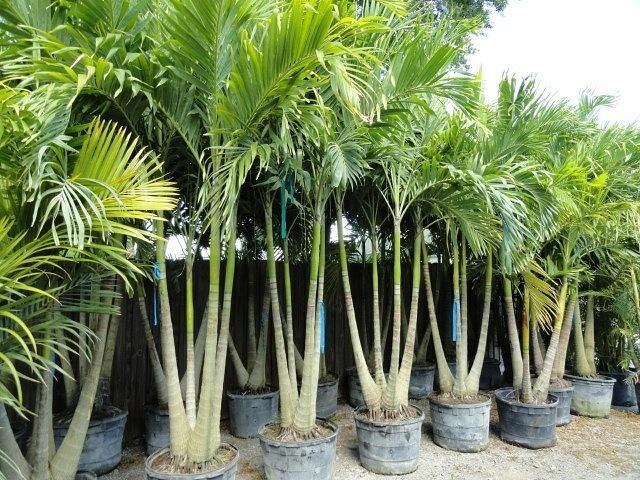palm trees ocean county nj