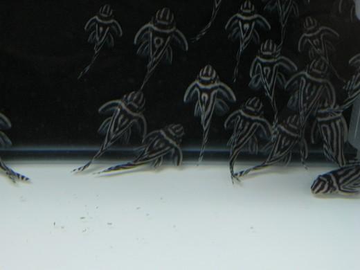 珍奇魚種大集合 - 2008水族暨寵物用品展 - 極地之夢 - Arctic Dream - udn部落格