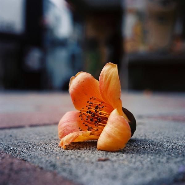 Spring flowers - Kodak Ektar 100