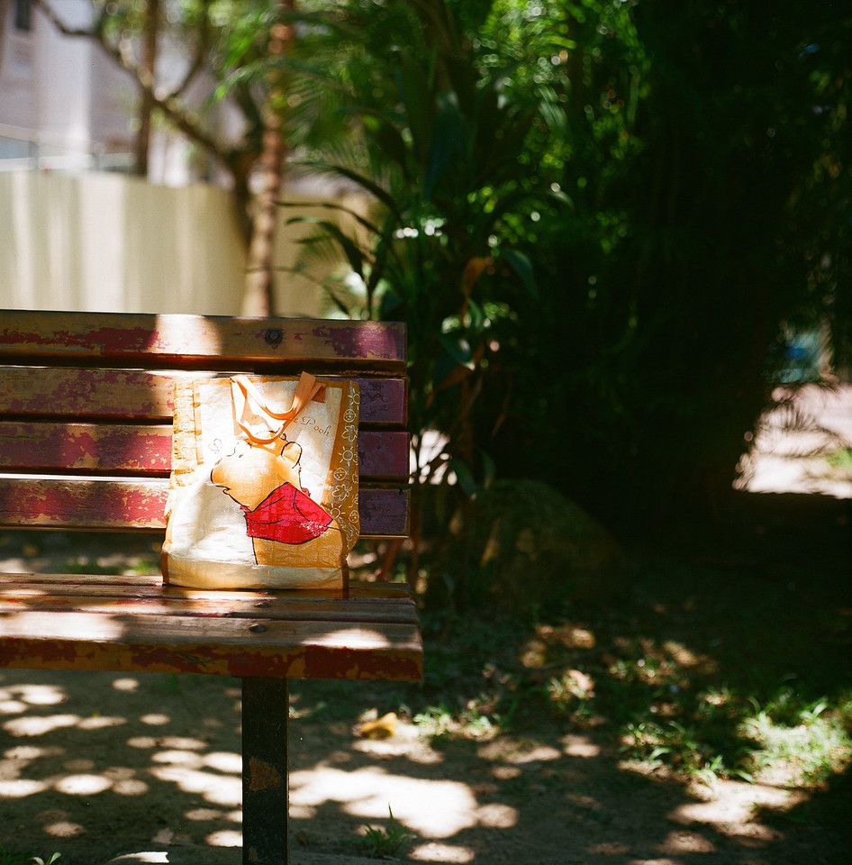 Sunny honey bear - Fuji Superia 100 shot at EI 100. Color negative film in 120 format shot as 6x6.