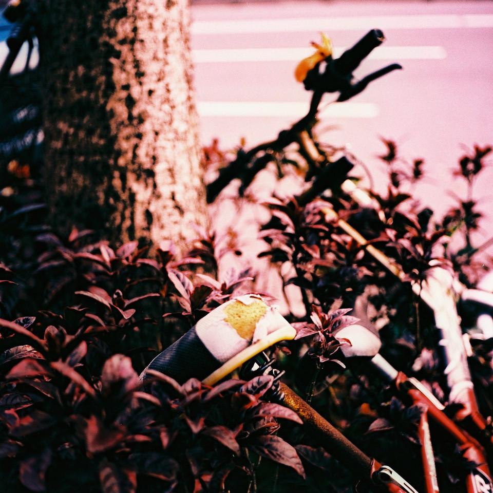 In the pink - Fuji Velvia 100 shot at ISO100