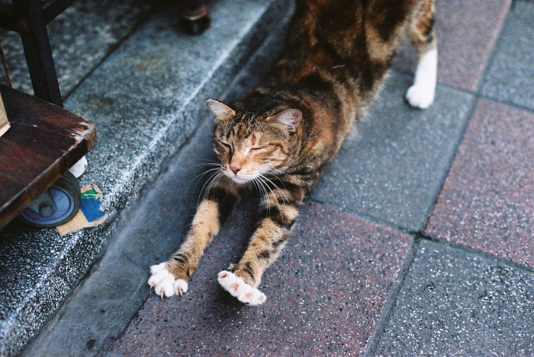 ...and stretch - Kodak 250D (5207) shot at EI 250. Color motion picture film in 35mm format.