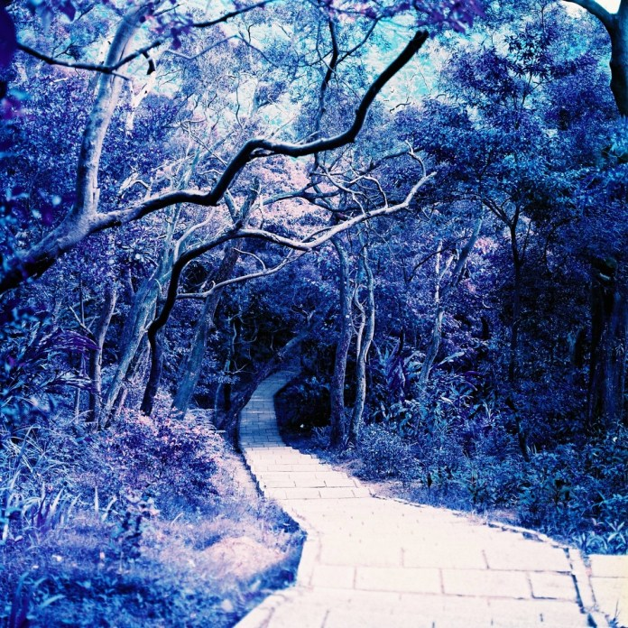 Enchantment - LomoChrome Purple XR 100-400 shot at EI 400. Color negative film in 120 format shot as 6x6.