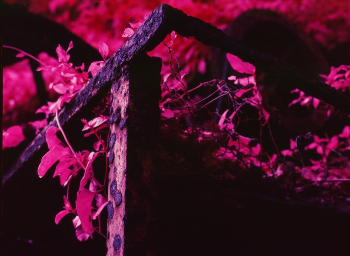 Degenerate - Kodak AEROCHROME 1443 - ISO200 - Planar 80/2.8 - Orange #21 filter / 120 as 6x4.5