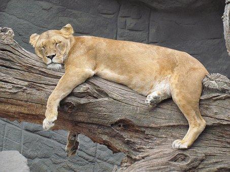 Quels sont les bienfaits de la sieste ?