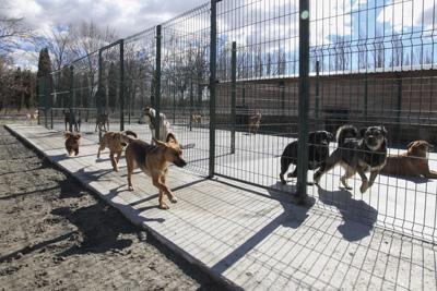 Recogida de animales en getafe