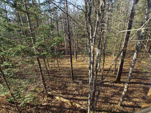 View From Treestand, copyright Al Cambronne