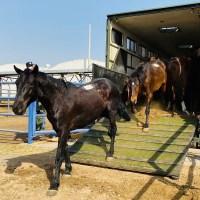 Sedena entrega a Birmex 60 caballos para elaborar suero contra COVID-19