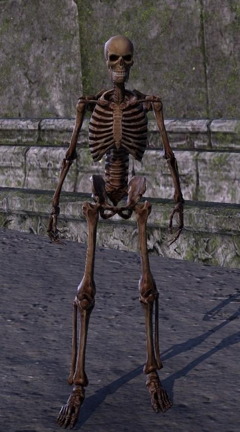 Skeleton Polymorph ESO
