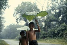 Boys use giant alocasia leaves to shield themselves from a storm near Betong. Thailand. By Dean Conger