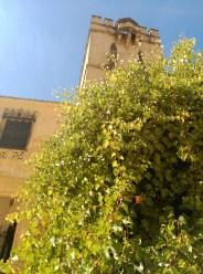 Vid americana junto a la Puerta de Marchena del Real Alcázar