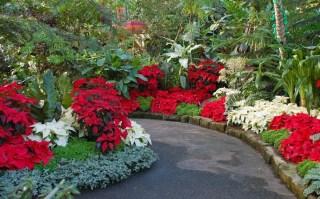 Composición de jardín con varias tonalidades de pascuero.