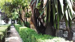 Mirto conviviendo con yucas y otras especies en el Patio del León, Real Alcázar