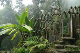 Musa x paradisiaca en el Jardín de Xilitla de Sir Edward James, México, 1962.