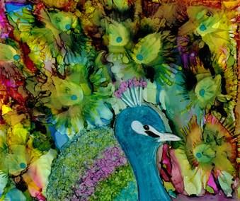 peacock2a