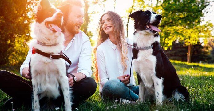 La adopción de perros y gatos