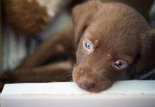 En octubre se han realizado 49 adopciones de animales en Alcorcón