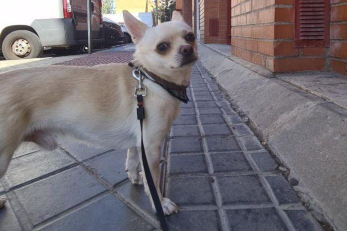 Una protectora de Alcorcón denuncia el atropello mortal de un perro