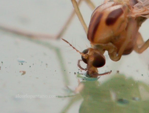 _MG_8863 cerco  mosquito recorte flickr
