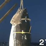 マグロ初セリ2020!釣った漁師の名前や取り分は?価格や競り落とした業者も!