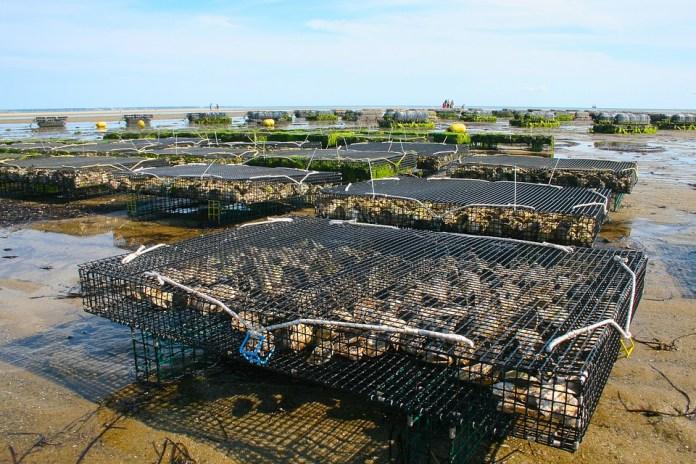 Blog 2-oyster-farm-1404177_960_720