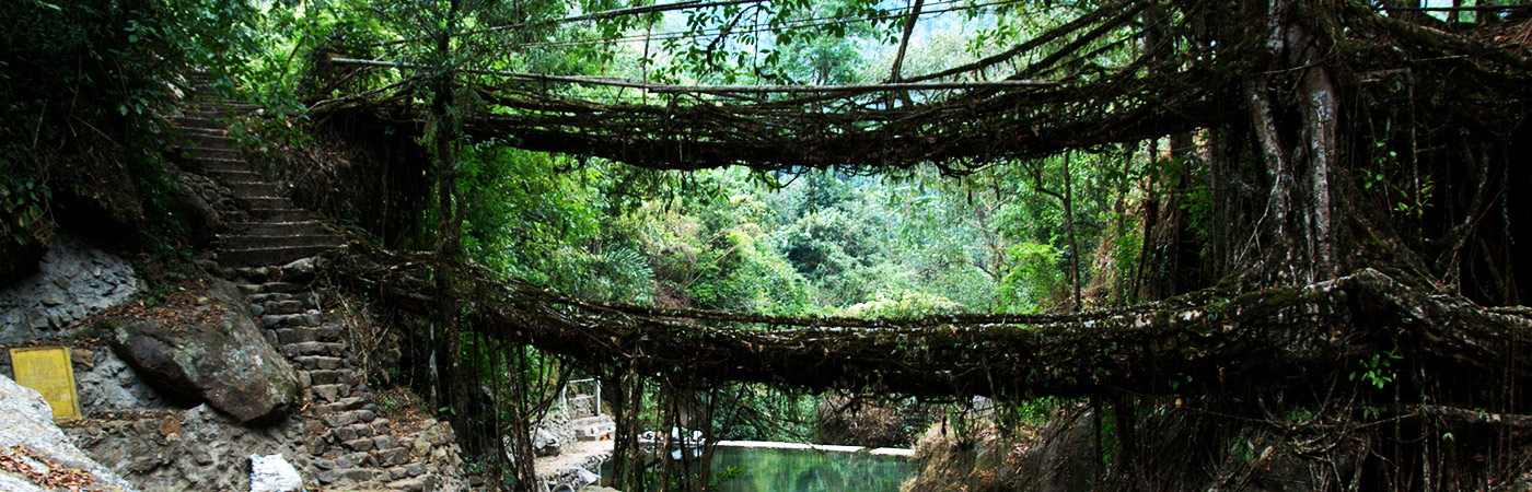 living-foot-bridge-meghalaya