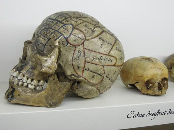 Reproducción de una calavera con un mapa craneal basado en la frenología, considerada una pseudociencia desde hace décadas