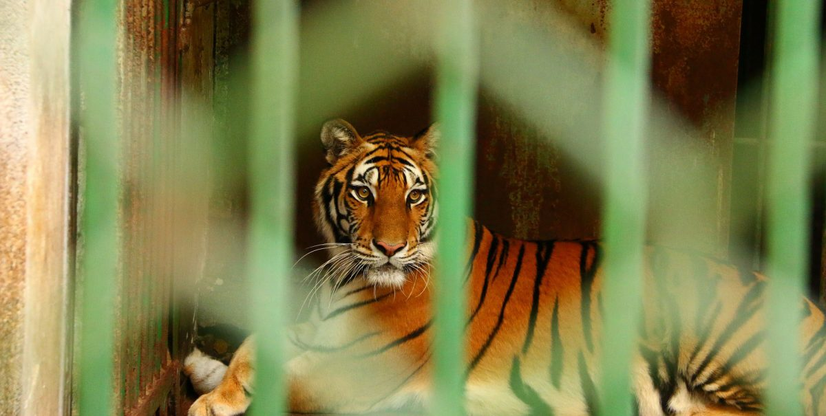 Federal criminal laws can cover activity that's overseen by federal agencies or that occurs between multiple states. Captive Animals - Animal Legal Defense Fund