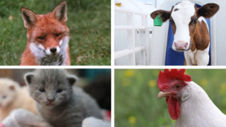 Animal Legal Defense Fund: 2018 Year in Review - Animal ...