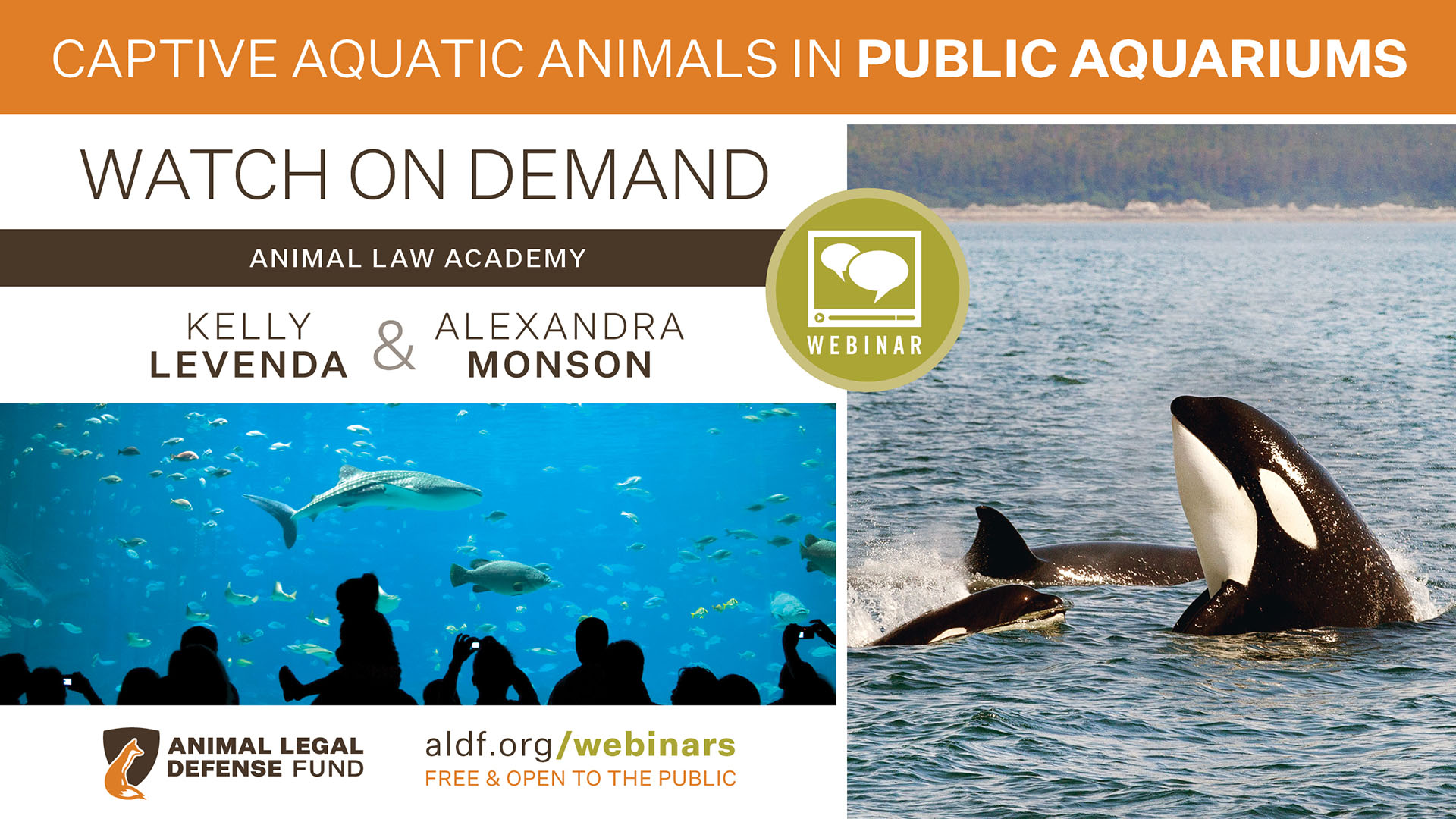 Captive Aquatic Animals In Public Aquariums 2019 Animal Legal Defense Fund