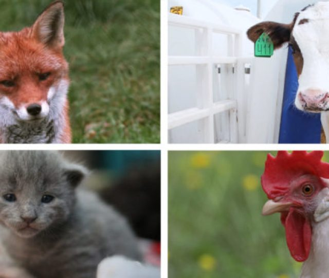 Animal Legal Defense Fund 2018 Year In Review