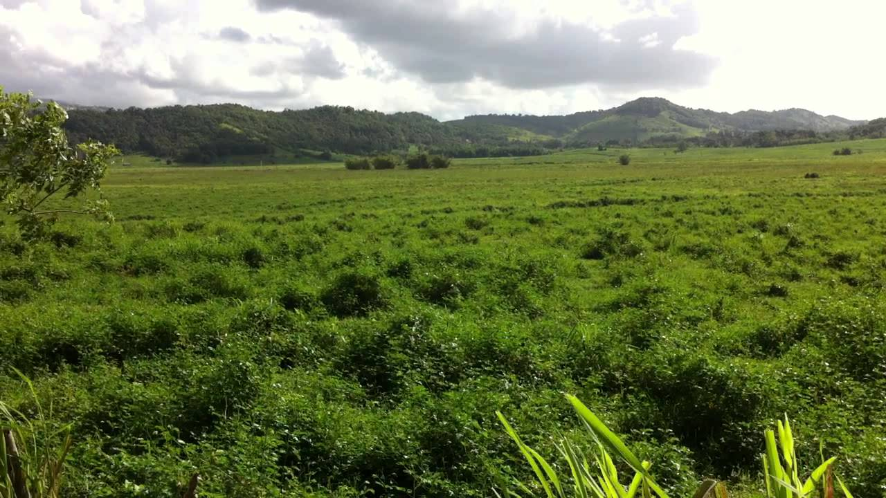 Finca La Hermosura en Las Piedras pudiera ser reserva agrícola
