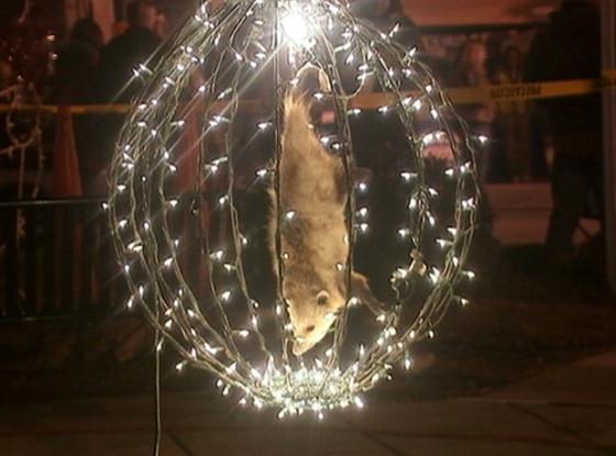 Celebración nuevo año zarigueya