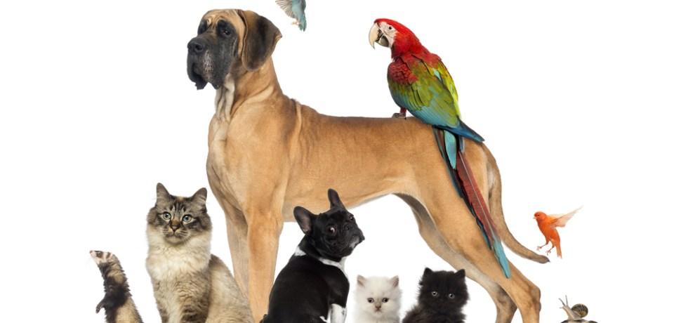Colaboración interagencial fortalecerá aplicación de leyes sobre bienestar y protección de animales