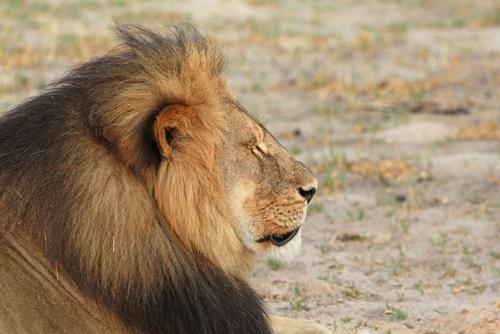Zimbabue persigue extraditar a dentista estadounidense que cazó a león Cecil