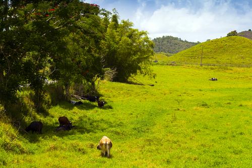 Agricultura con potestad para otorgar permisos de poda y desmonte de terrenos
