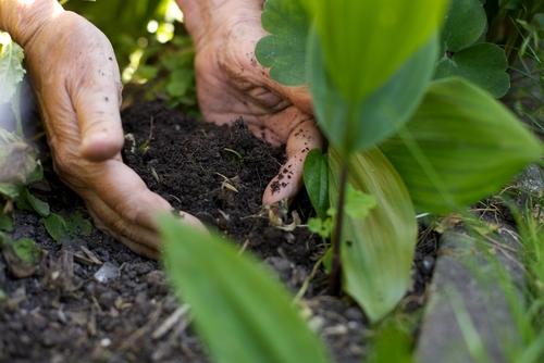 Medida para crear huertos caseros en favor de personas de edad avanzada