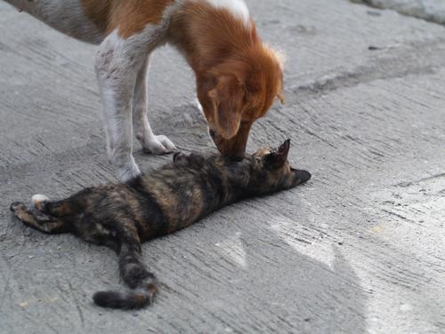 En la mira proyecto que crearía ley para control efectivo de mascotas