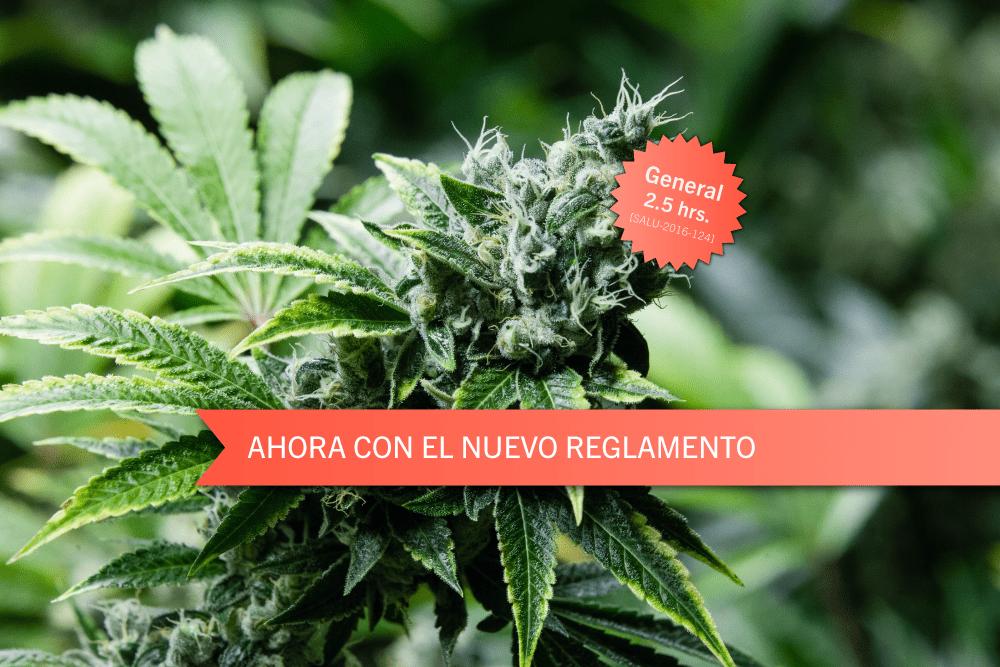 Todo sobre el cannabis medicinal: Historia, reglamentación y consideraciones legales