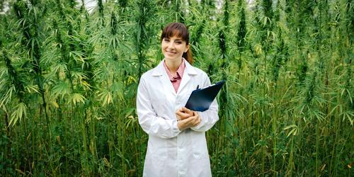 Crean el primer registro de personas habilitadas para trabajar en industria del cannabis medicinal