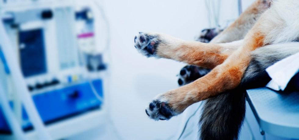 Anuncian acuerdo para realizar clínicas de esterilización gratis para mascotas