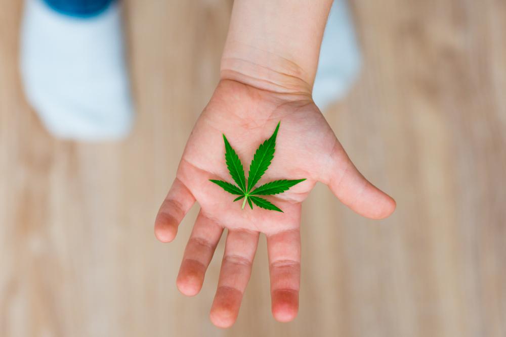 Departamento de Salud presenta virtudes del cannabis medicinal