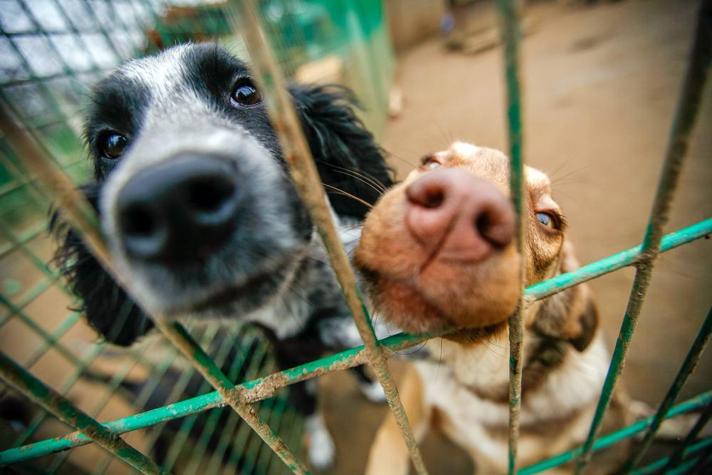 animales perros