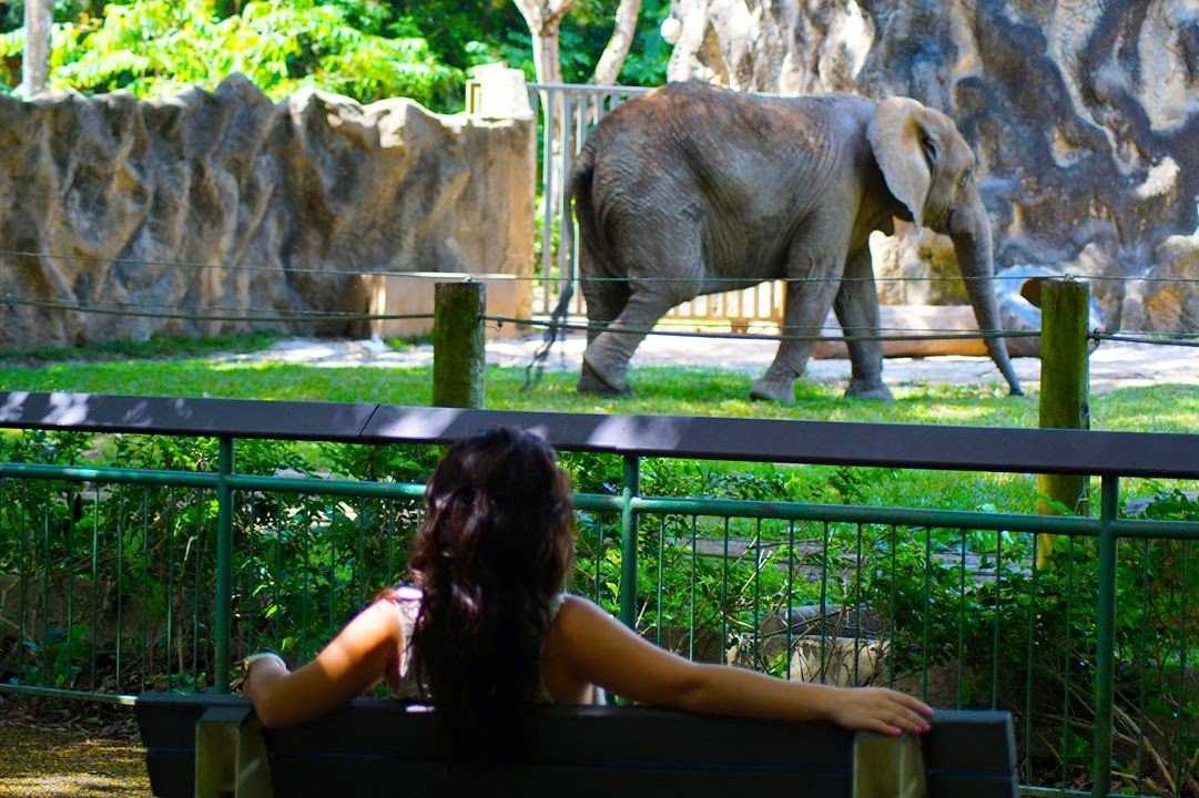 zoo zoológico