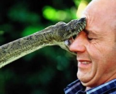 gjarpër - njeri